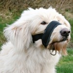 Botnita Nylon XL Rottweiler (bot: 23-34cm; gat:20-30cm) Trixie 19282